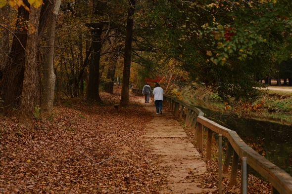 Walking Through The Woods 2