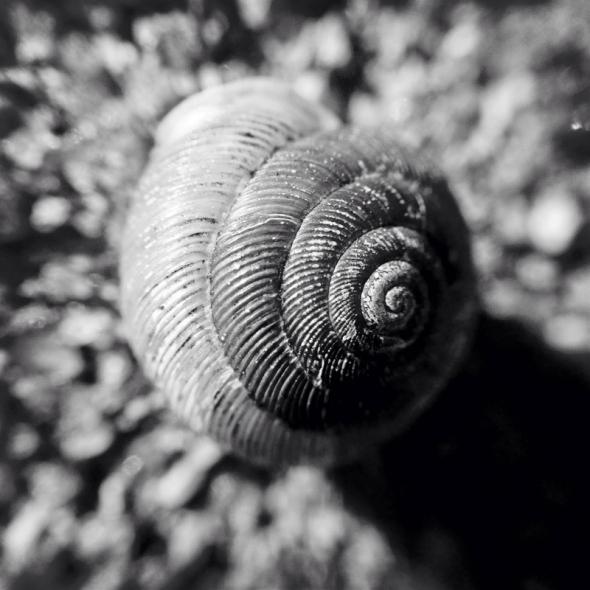 Evening Shell