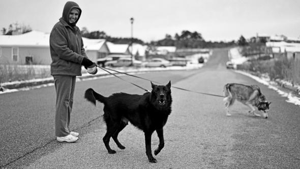 Dog Walker 2 For Blog