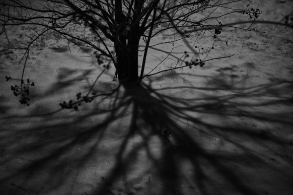 Tree, Snow, Shadow