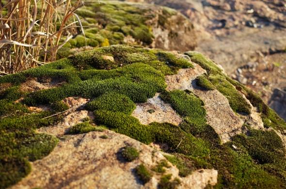 The Moss fb