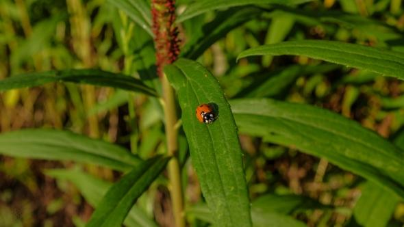 bug life 2