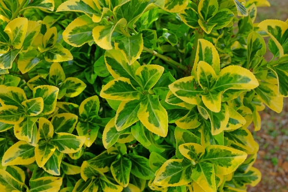 green and yellow plant