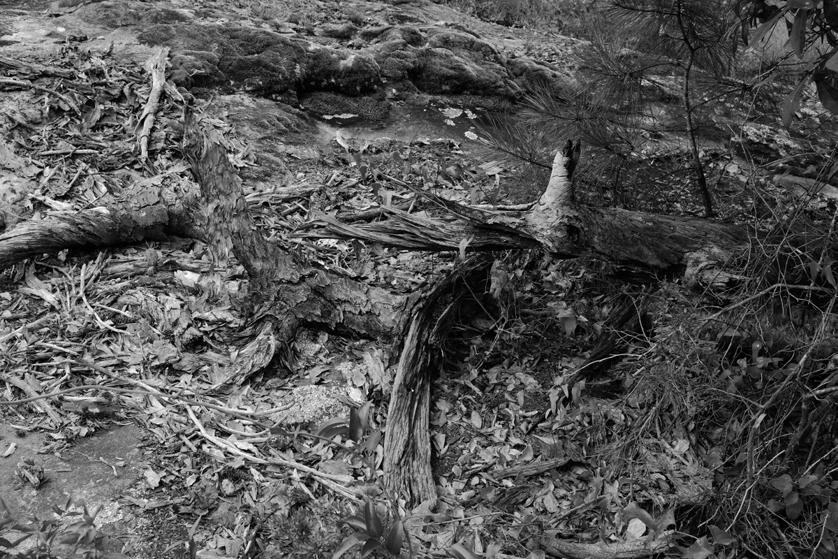 bark, moss, pine blog