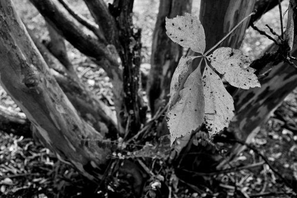 falling leaf blog
