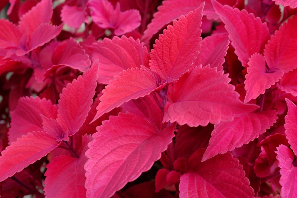 pink plant 1