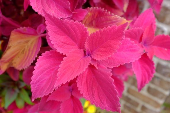 pink plant 3