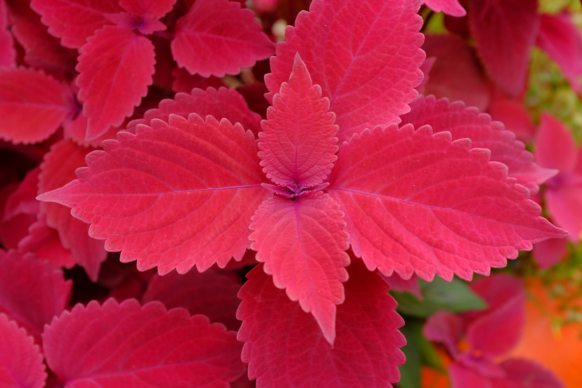 pink plant 4