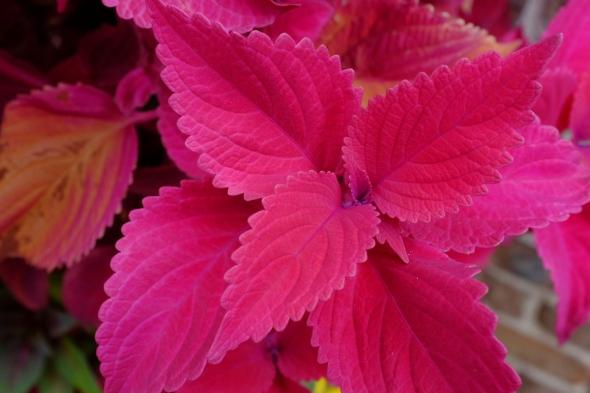 pink plant 5