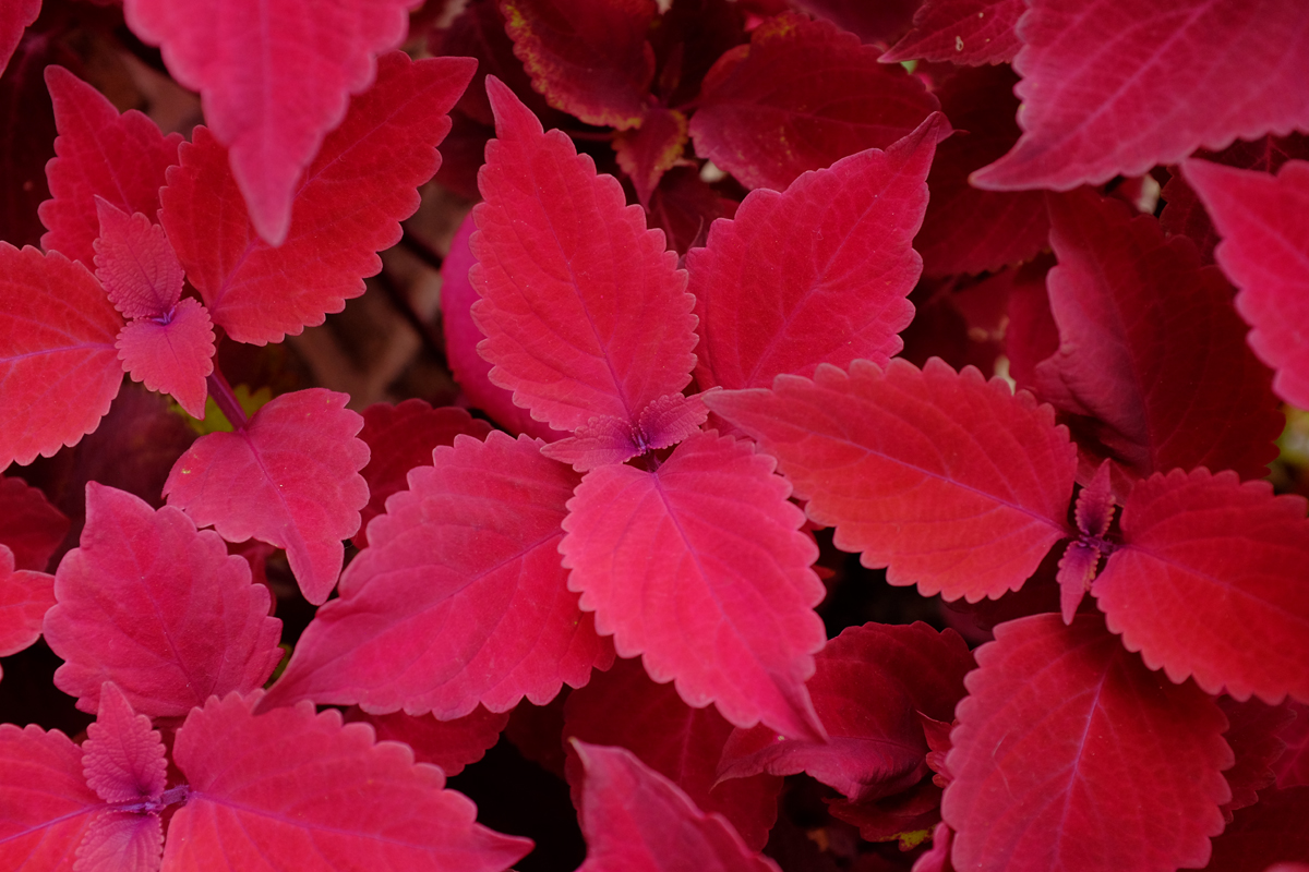 pink plant 6