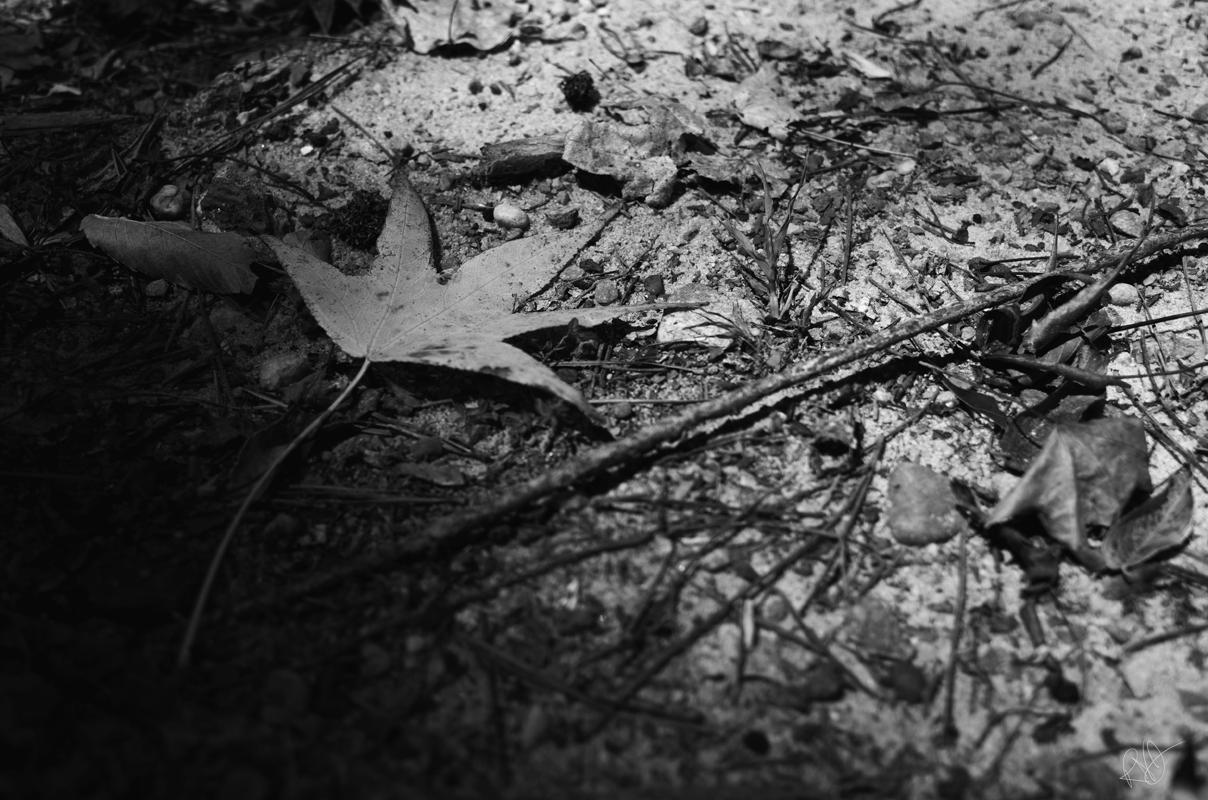 singular leaf