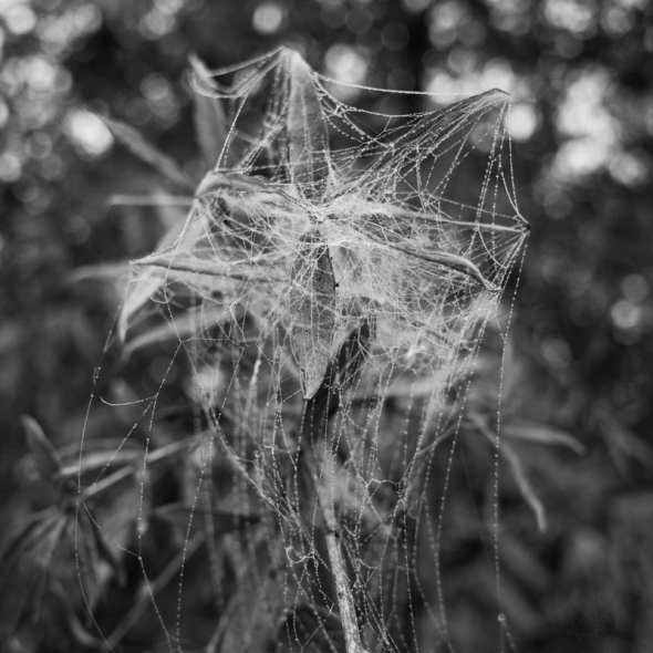 Water Web BW 1