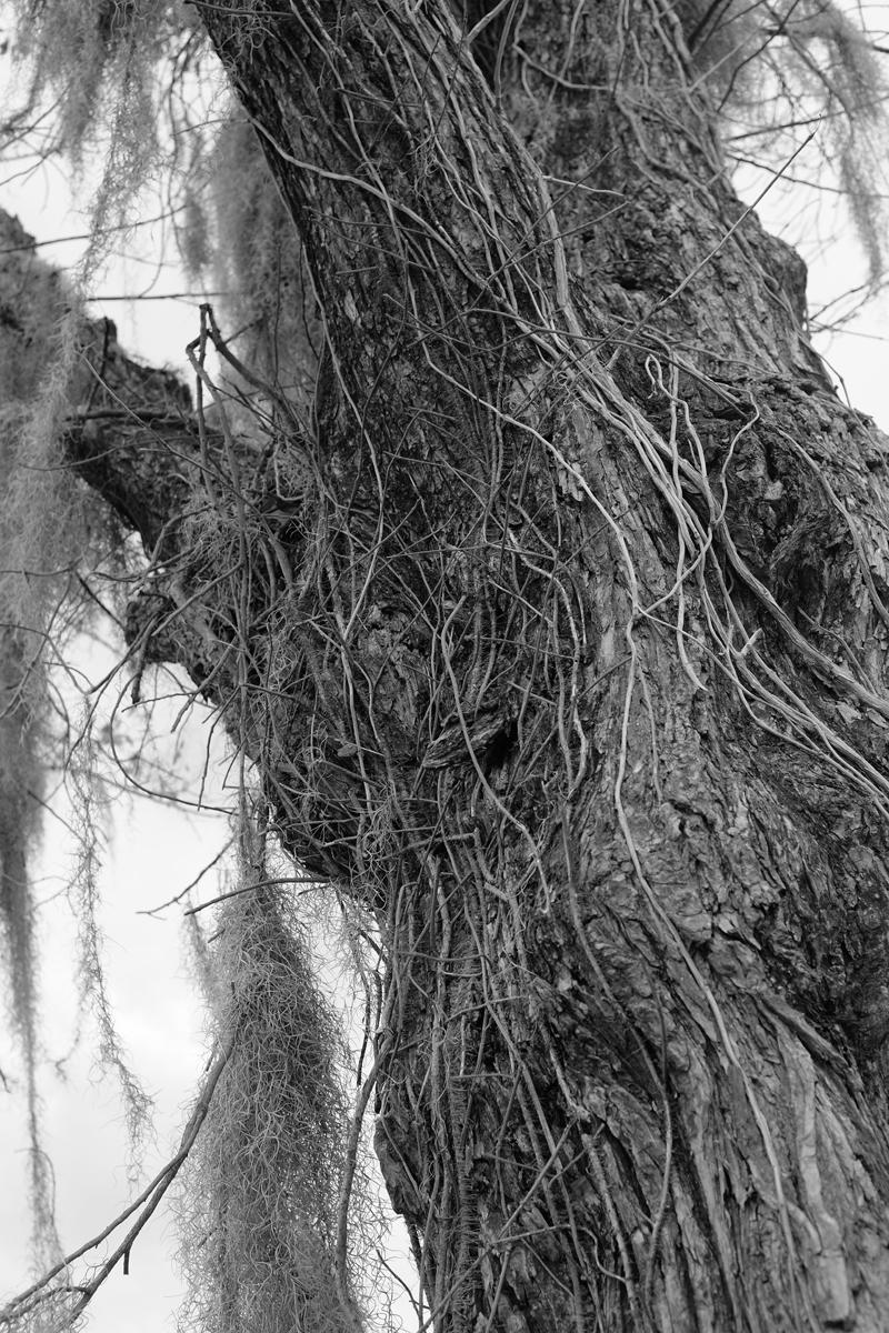 fuzzy tree 1