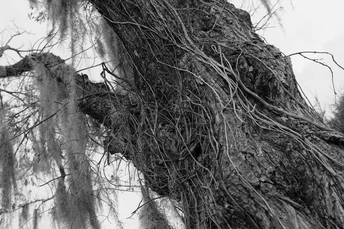fuzzy tree 2