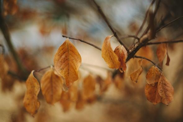 Hilltop Autumn Plant 7