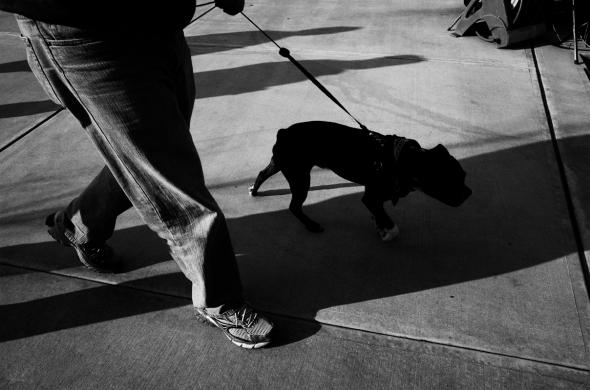 dog walker 2