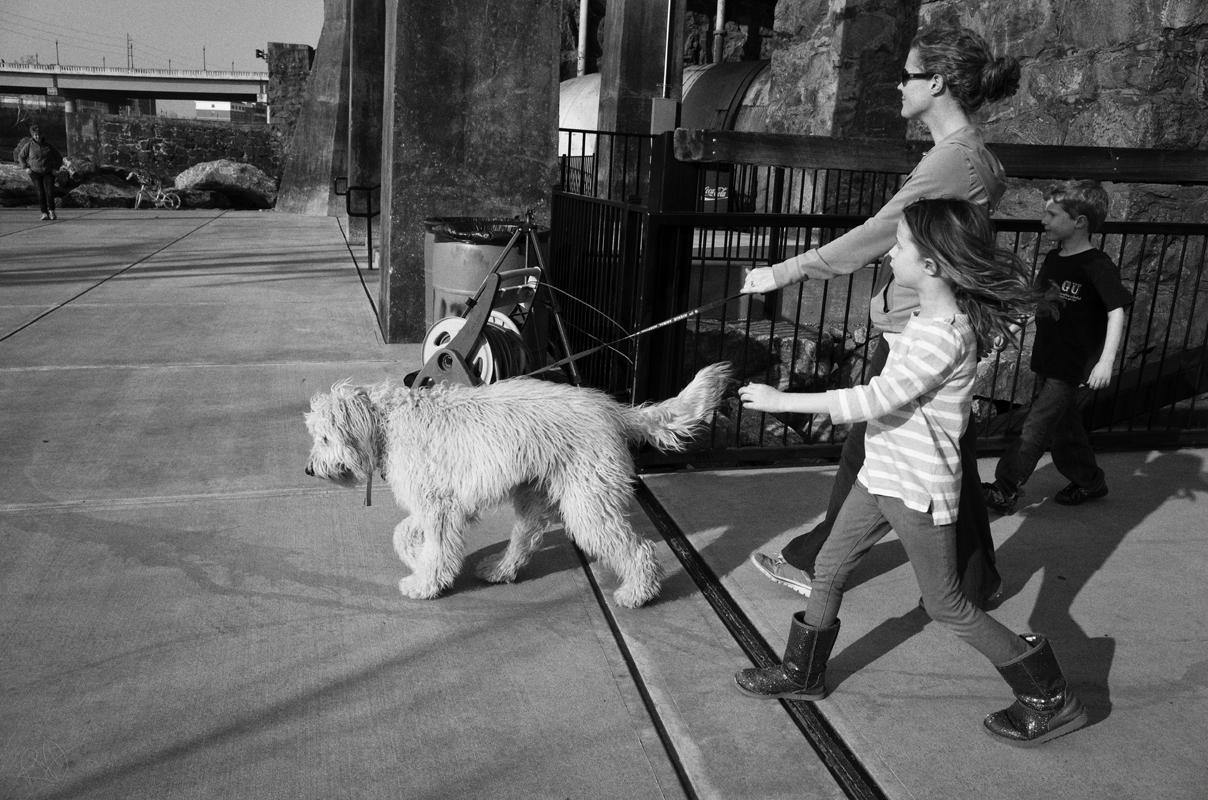 dog walker 3
