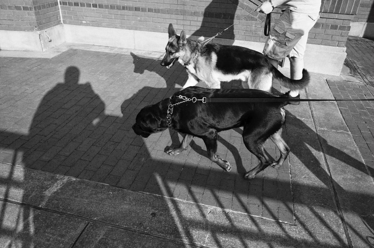 dog walkers 7