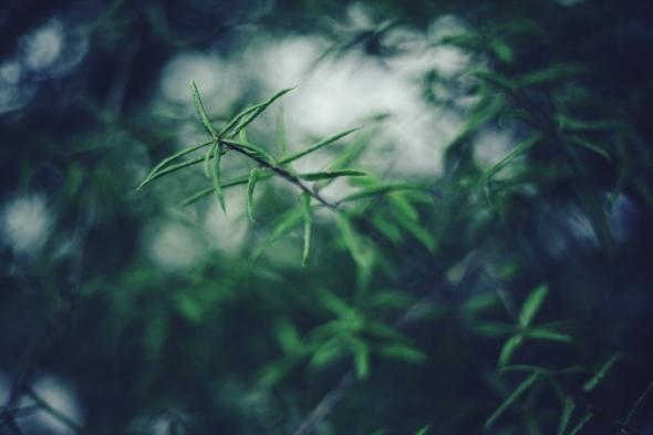 Good Raining Moring Leaves