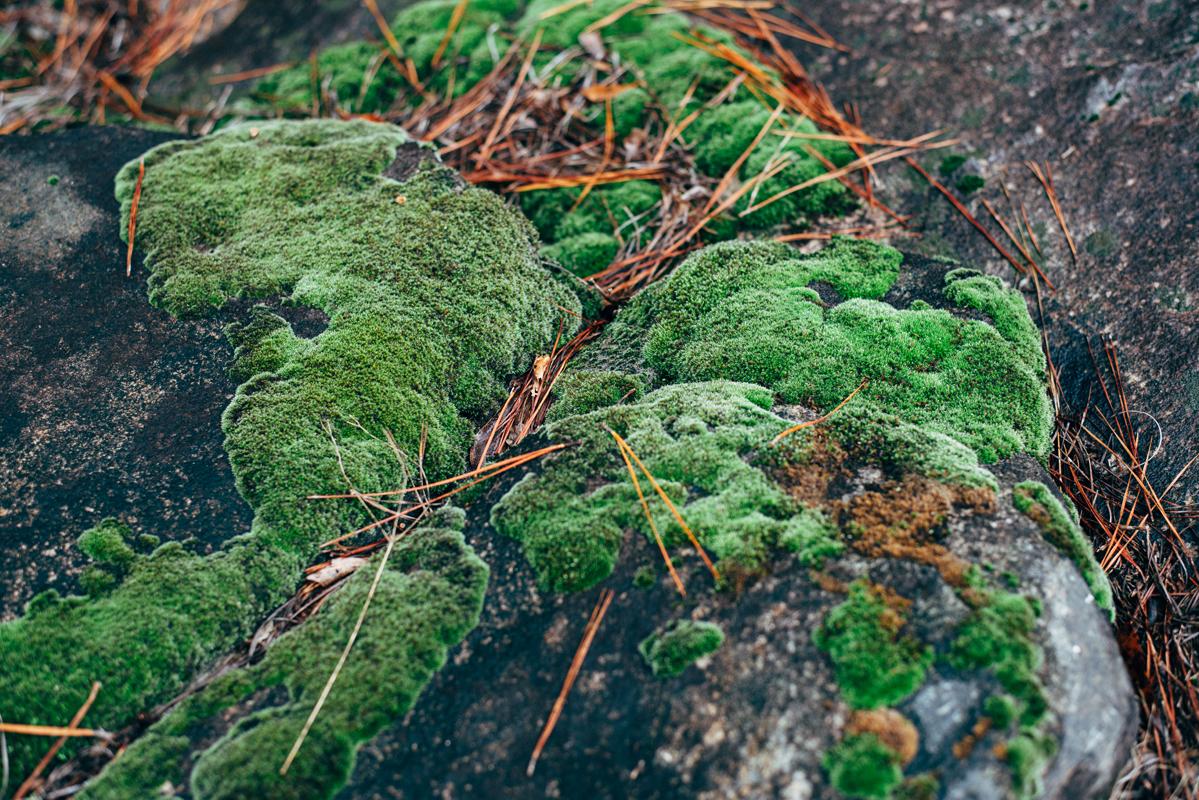 Colorful Rock Moss 1 blog