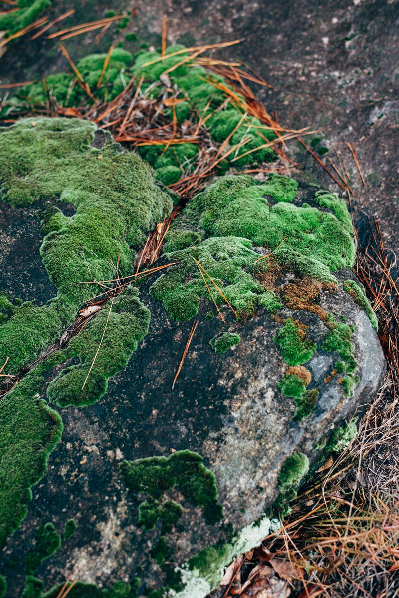Colorful Rock Moss 2 blog