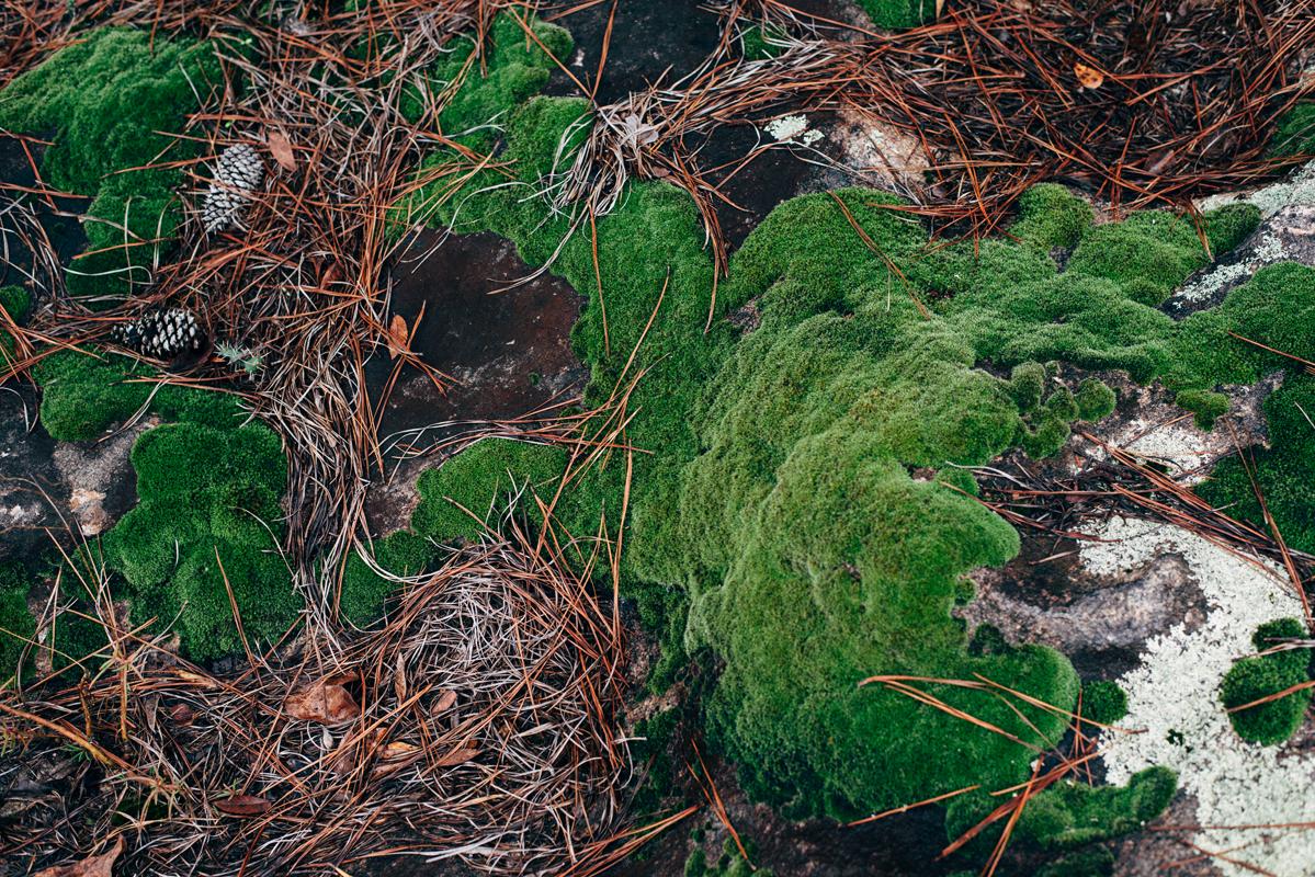 Colorful Rock Moss 3 blog