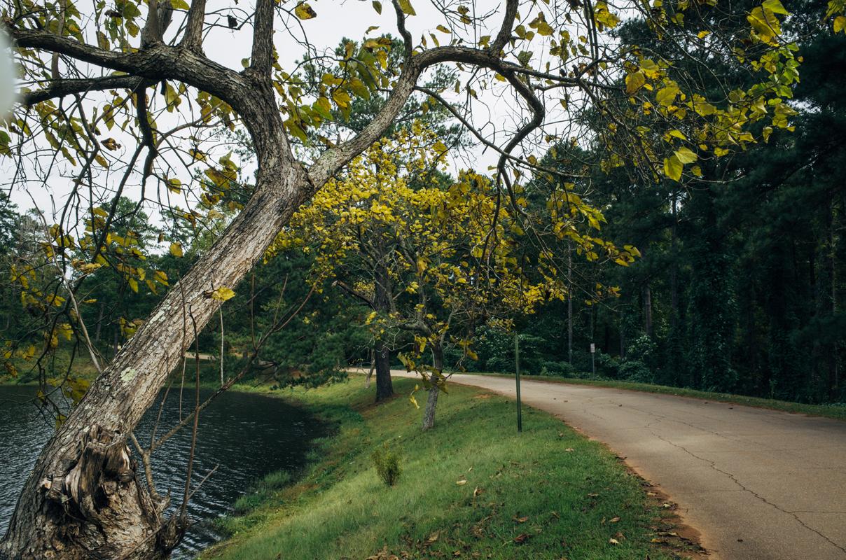 Flatrock Tree Colors 1 blog