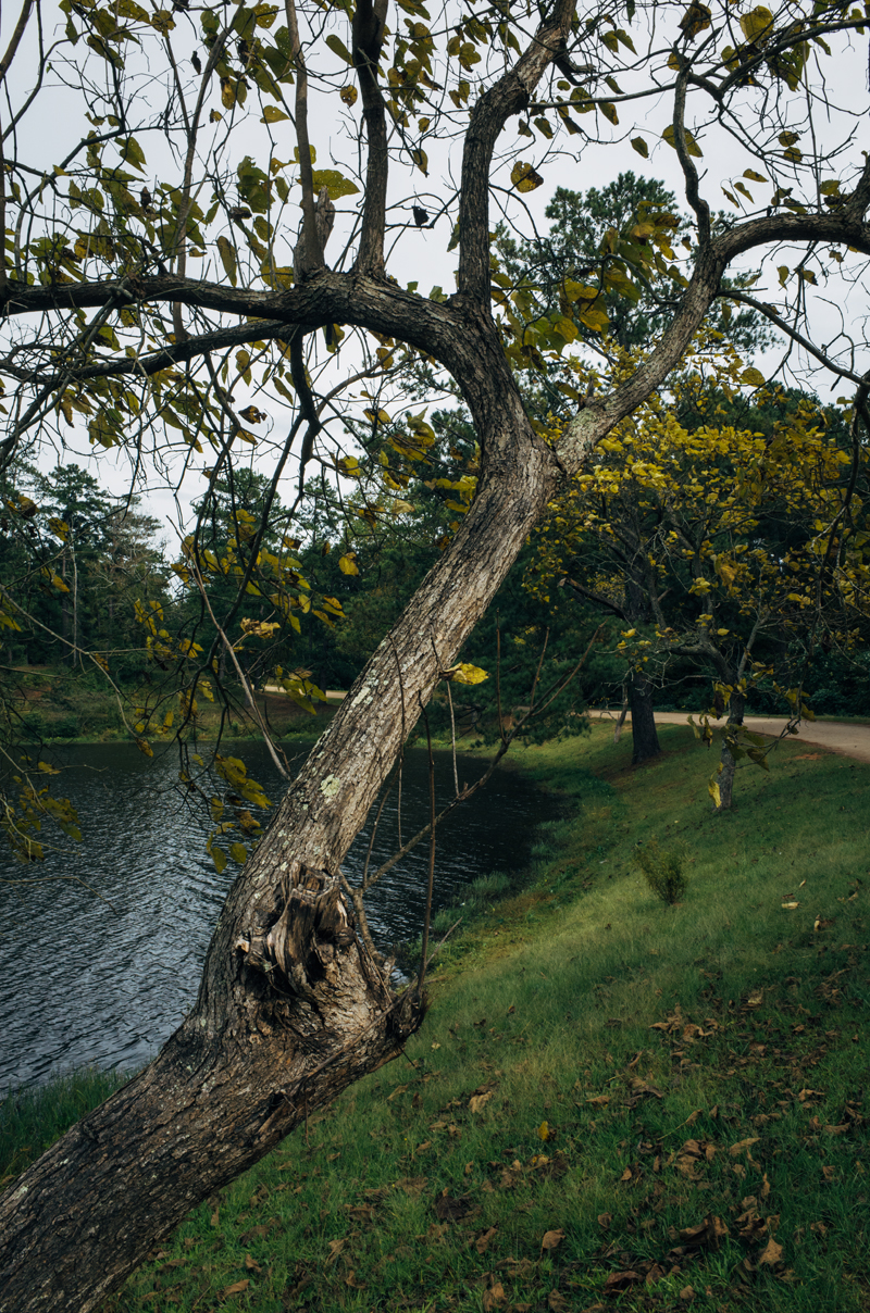 Flatrock Tree Colors 2 blog
