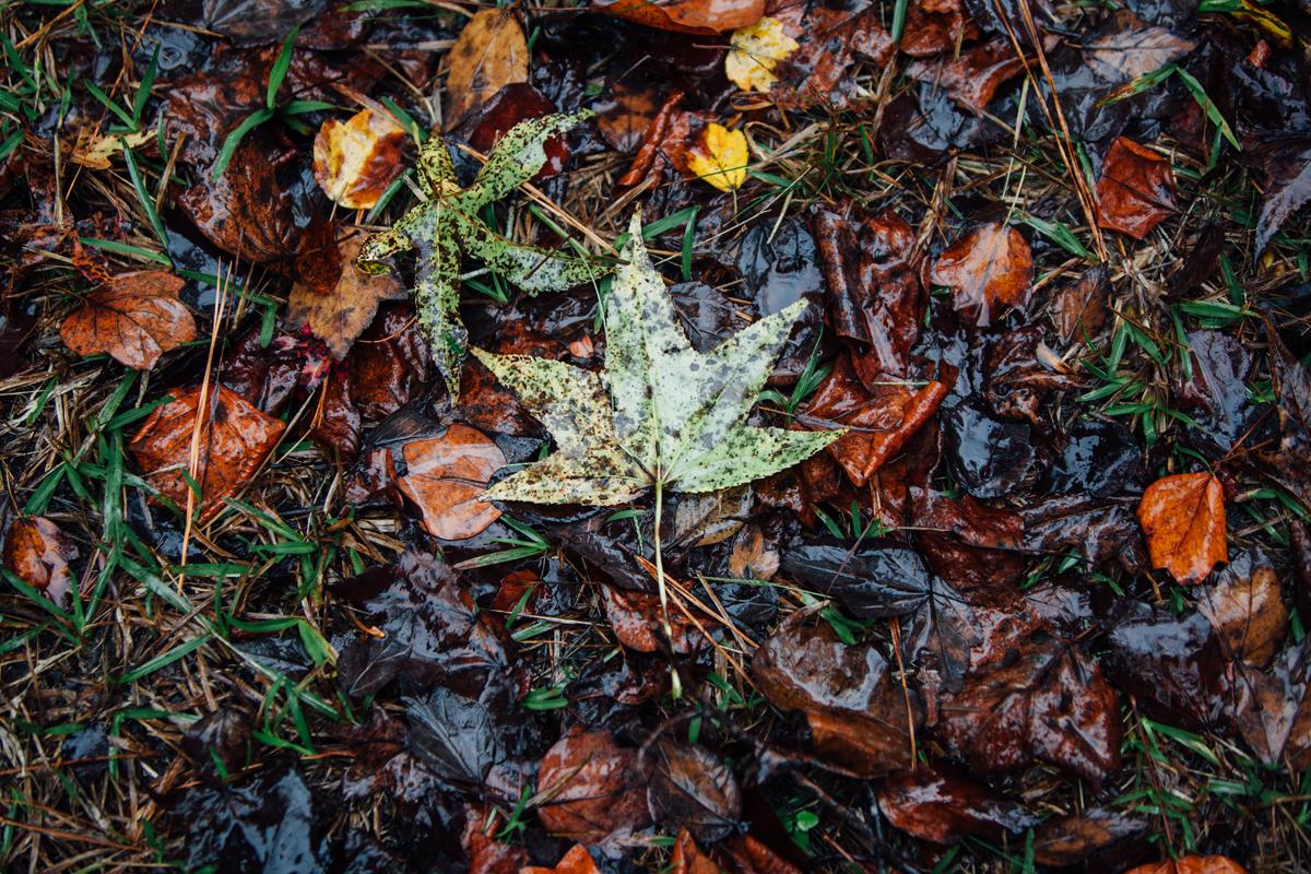 Gren Leaf 1 blog
