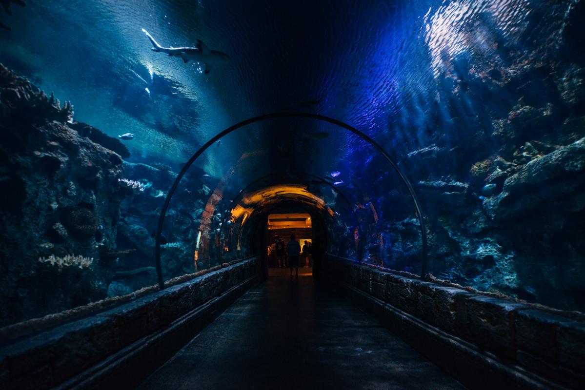 Inside The Aquarium 1 blog