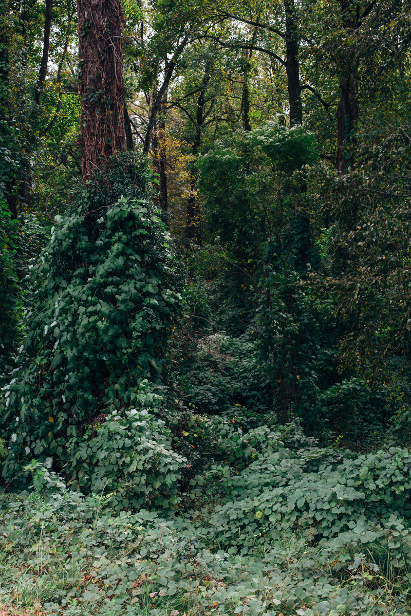 Lush Greenery 1 blog