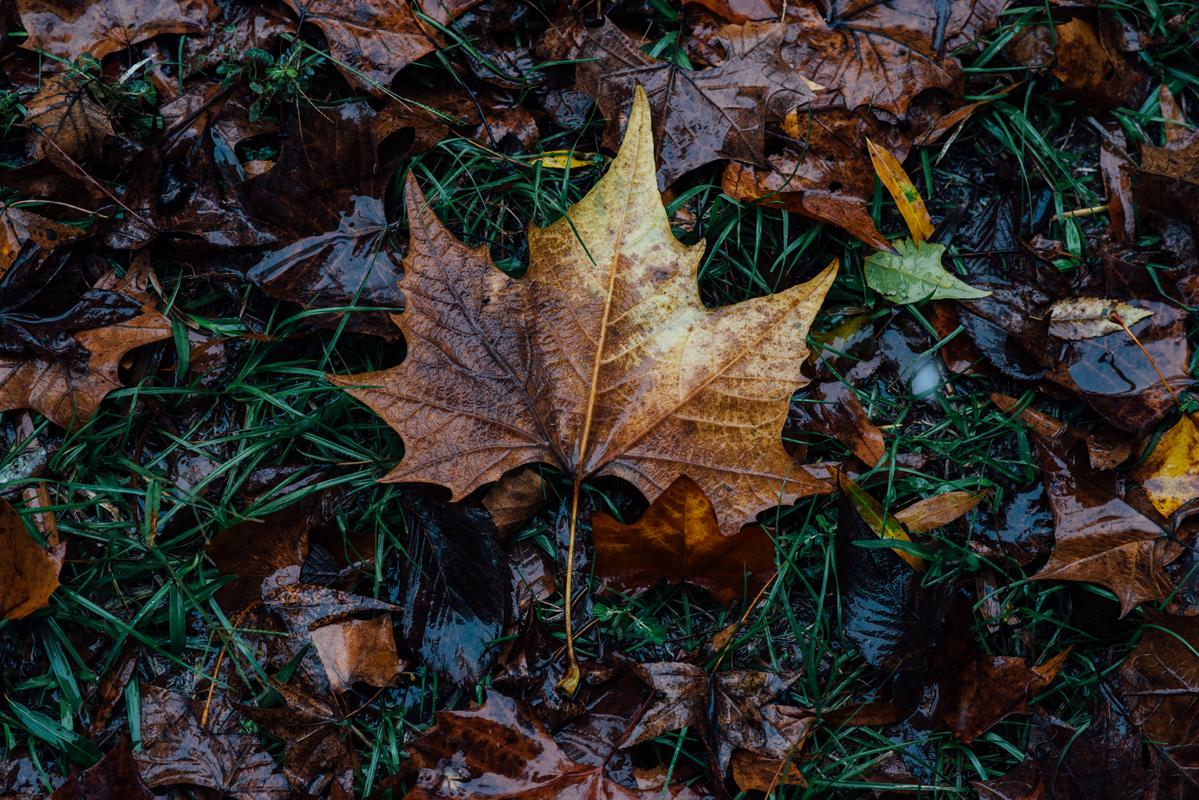 Perfect Golden Leaf 1 blog