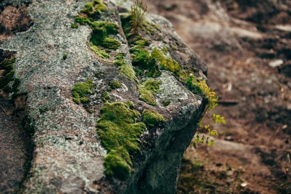 Rock Moss 1 blog