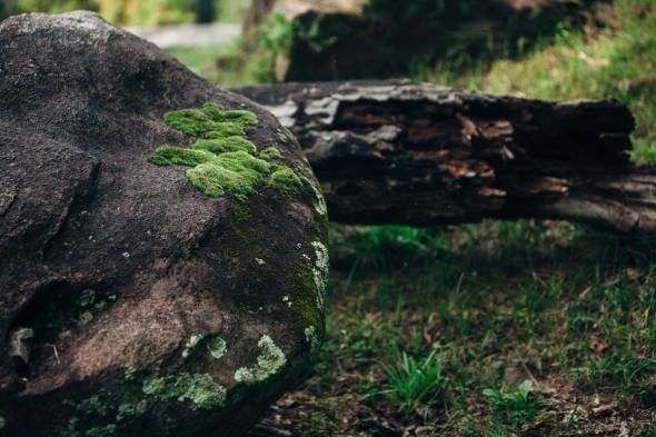 Rock Moss 2 blog