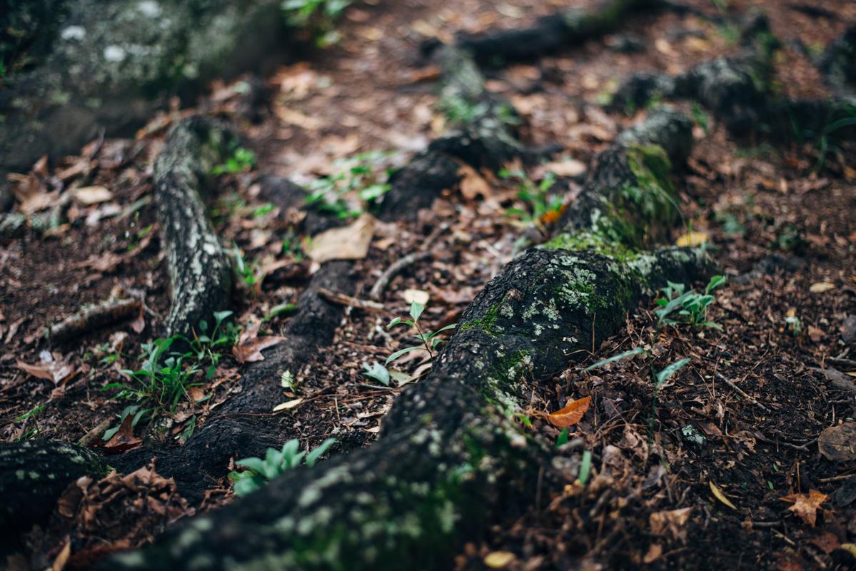Root Moss 1 blog