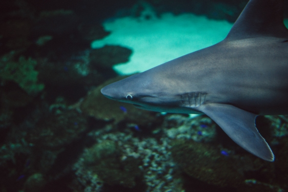 Shark 2 blog
