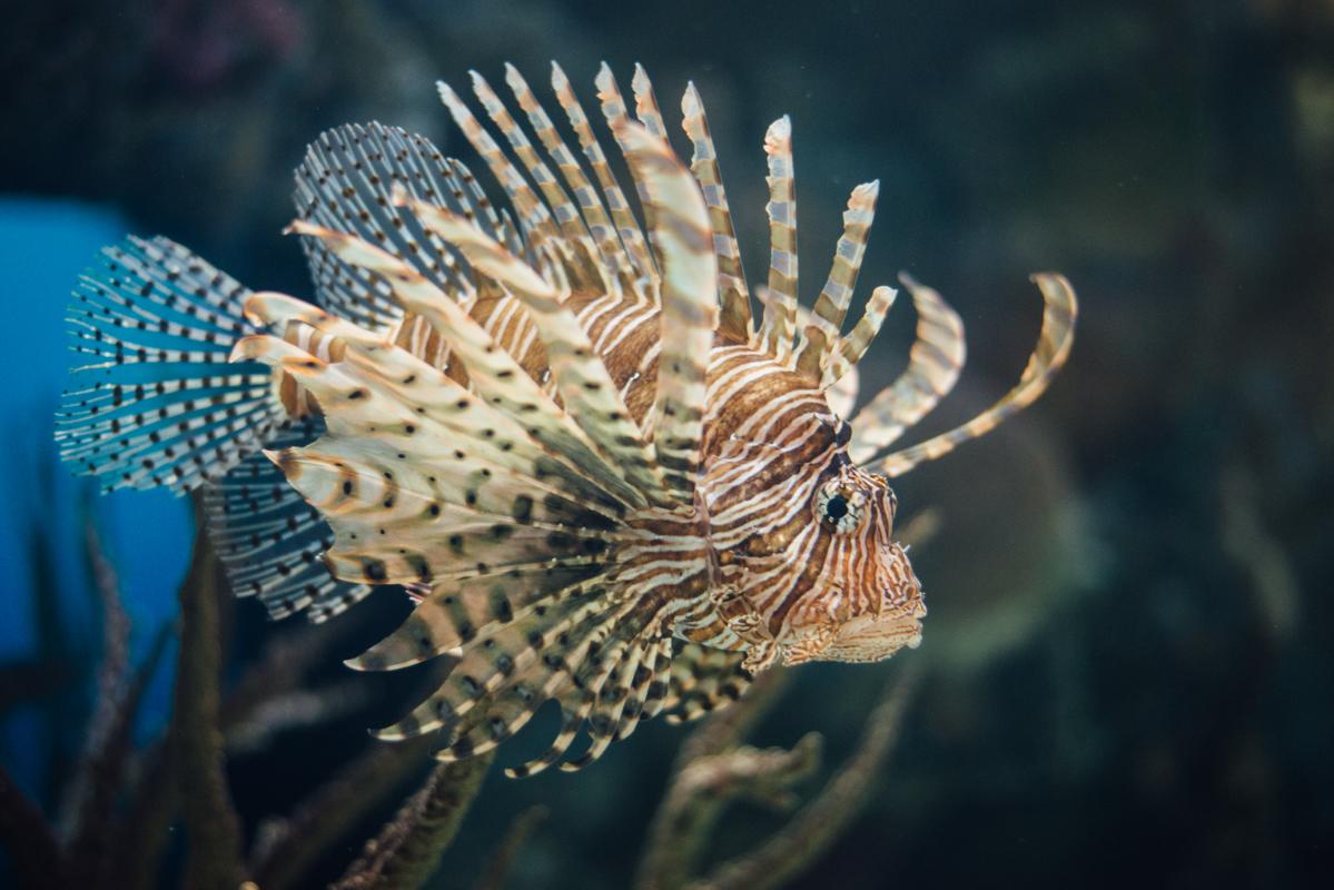 spike fish 4 blog