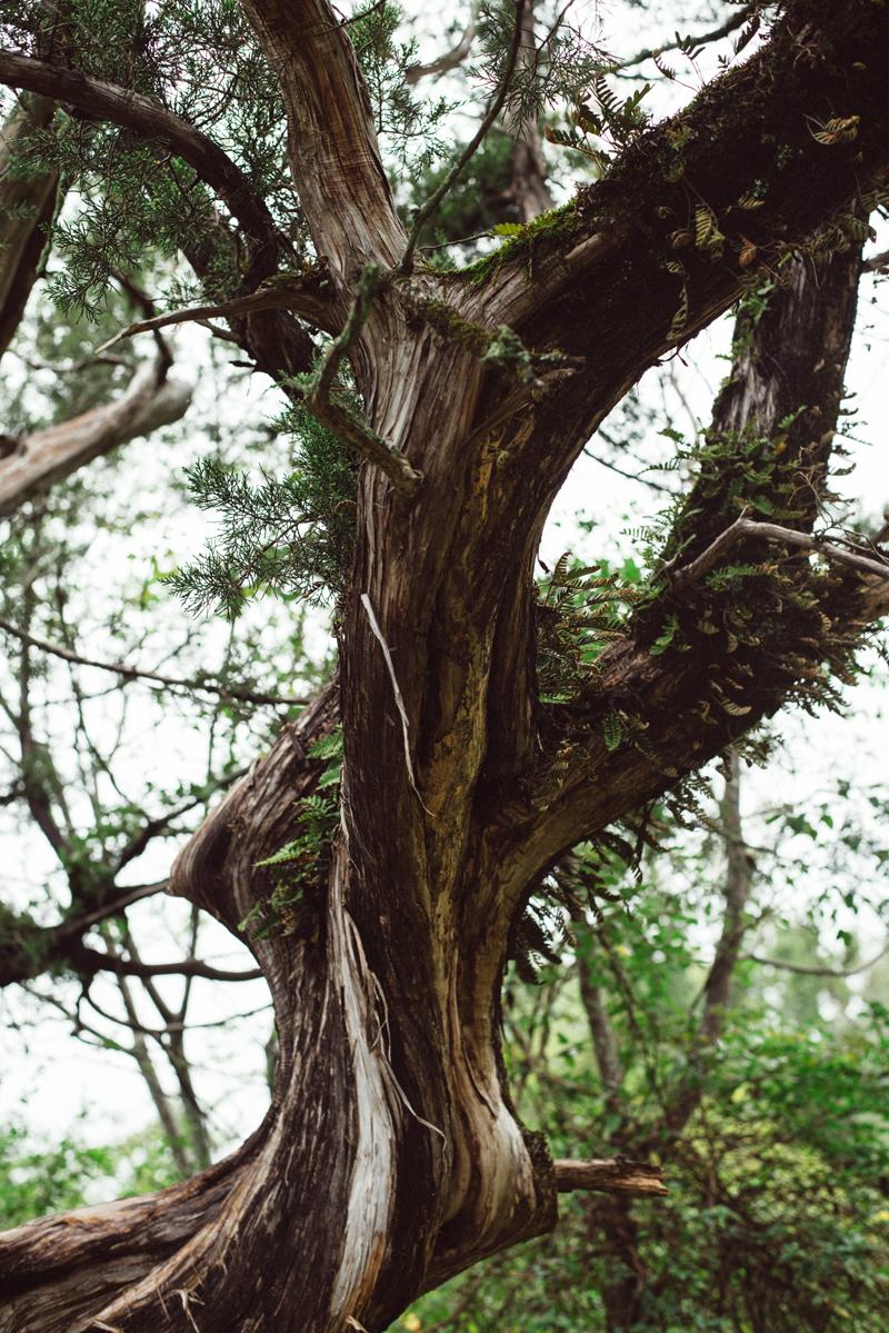 Twisted Tree 2 blog