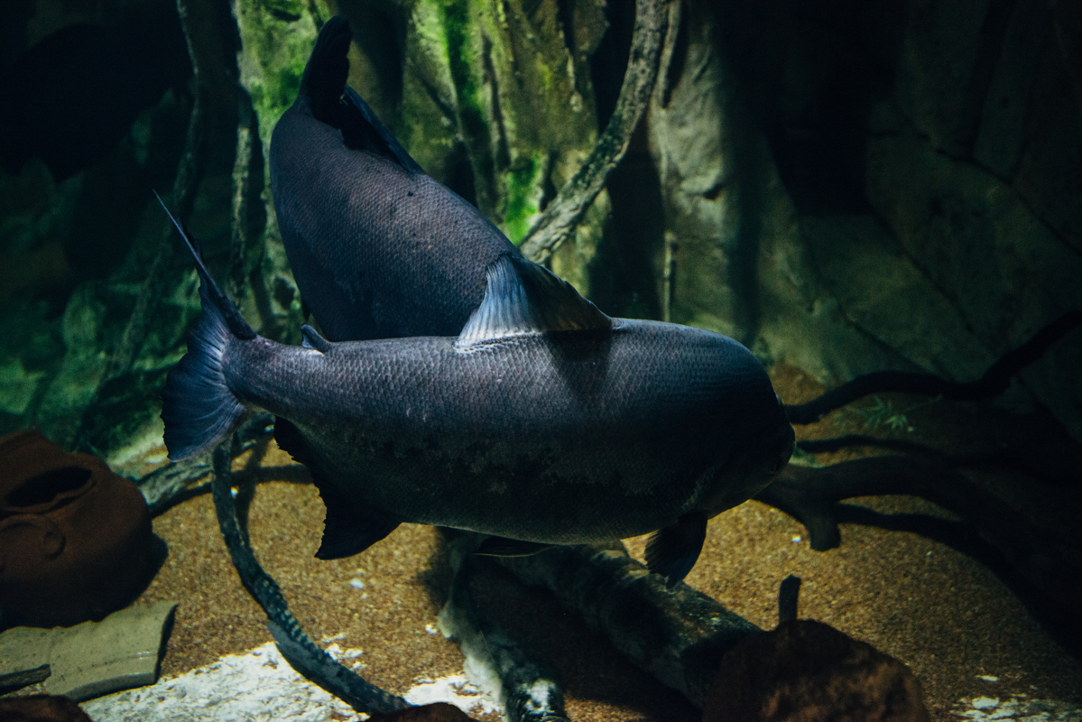 Big Dark Fish blog