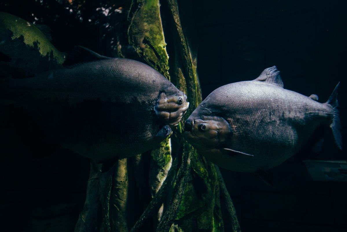 Big Round Fish 2 blog