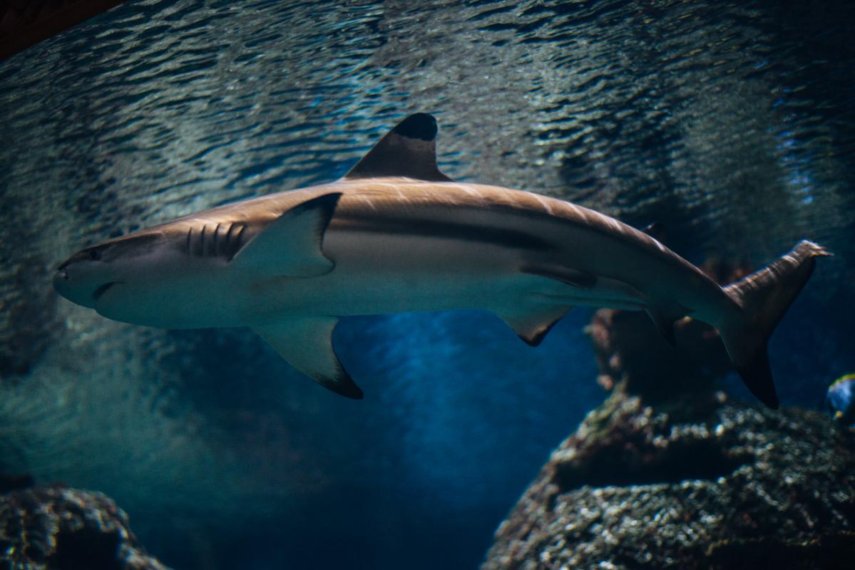 Big Shark 1 blog