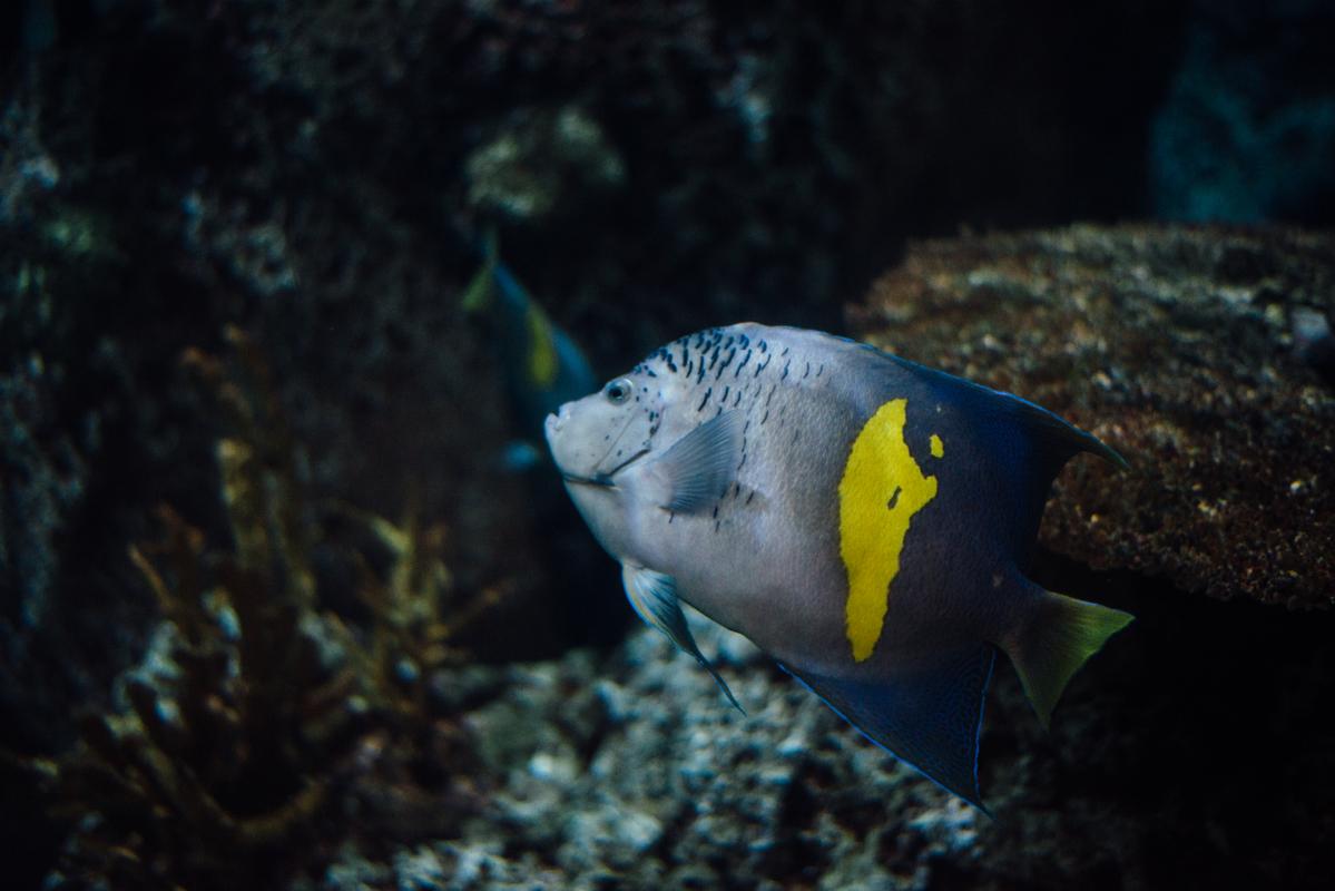 Blue & Yellow Fish 1 blog