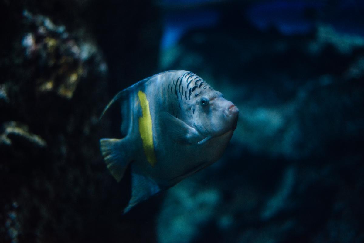 Blue & Yellow Fish 2 blog