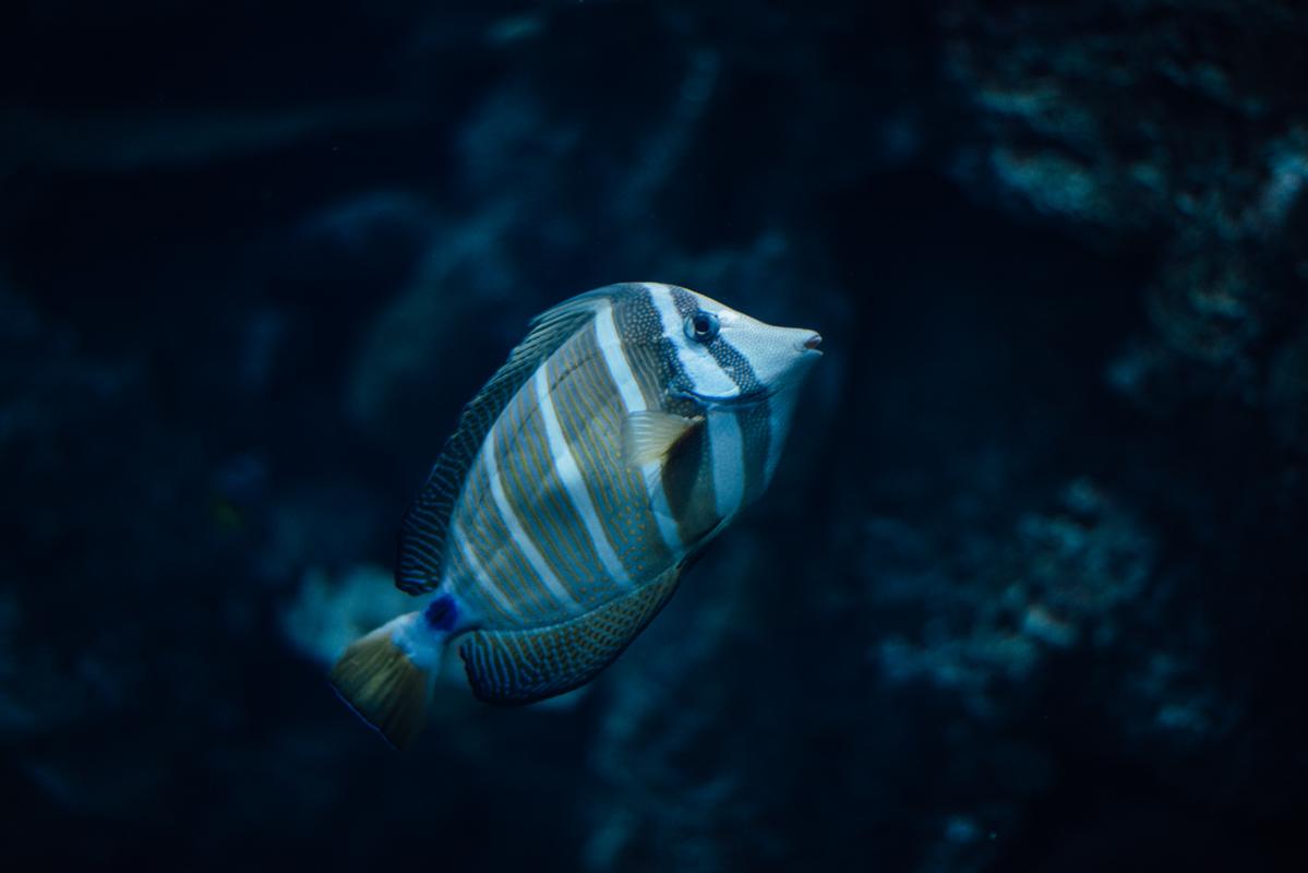 Cool Strip Fish 1 blog