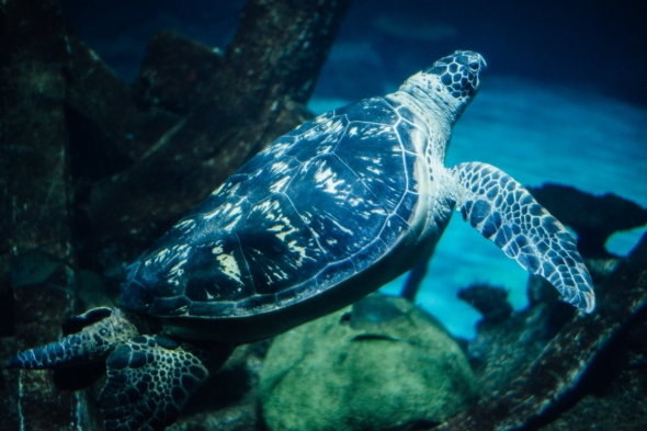 Huge Sea Turtle blog