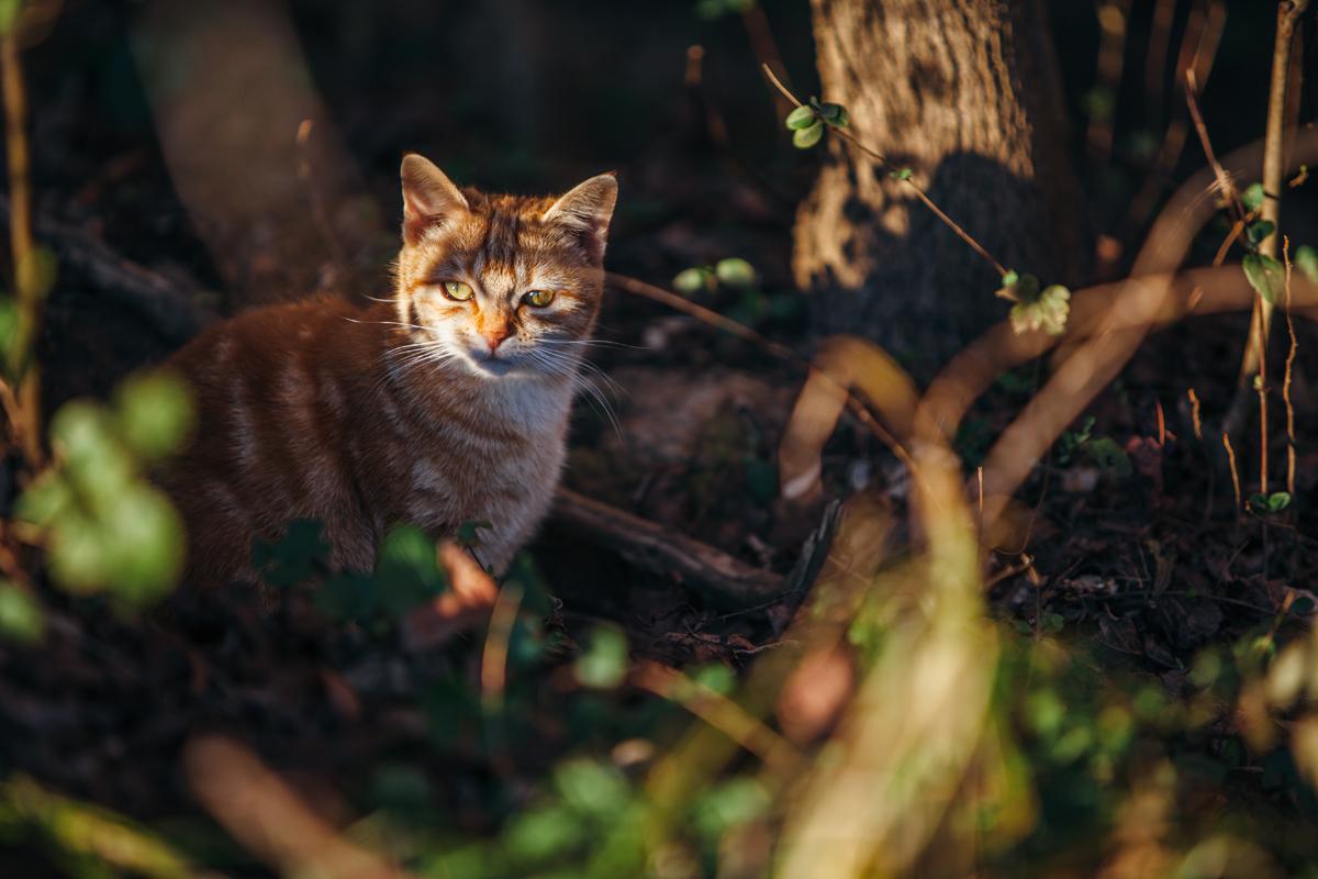Kitty 6c blog