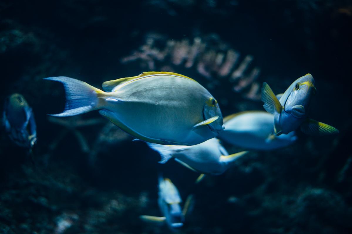 Light Blue Fish 1 blog