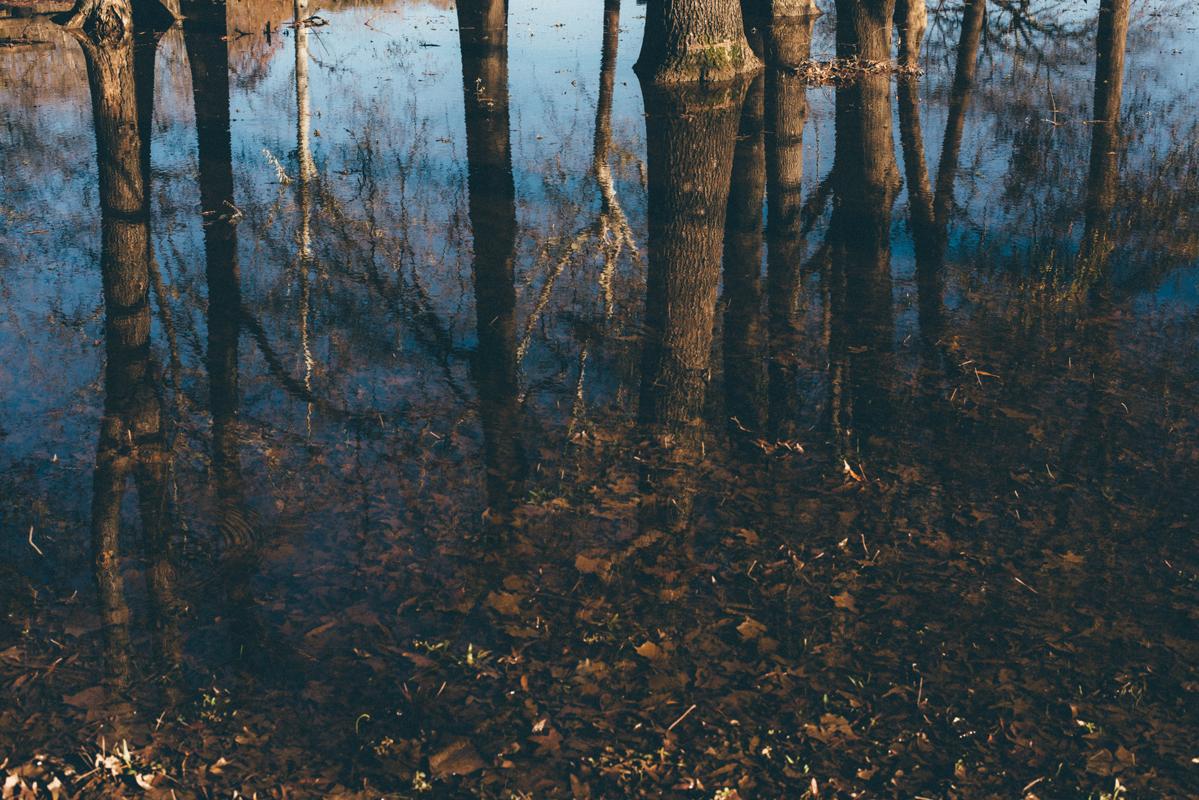 Tree Reflections 1 blog