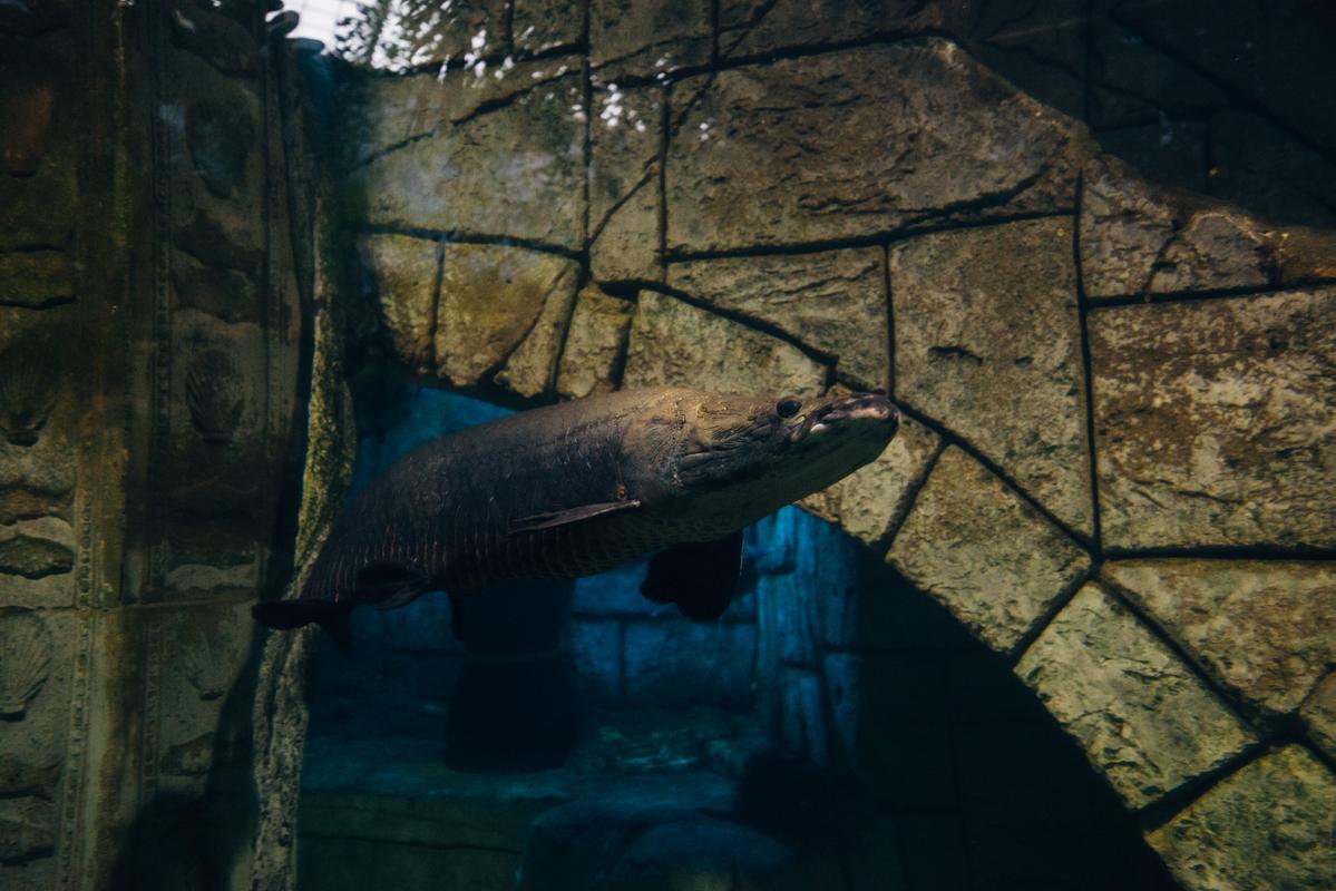 Weird Fish 1 blog