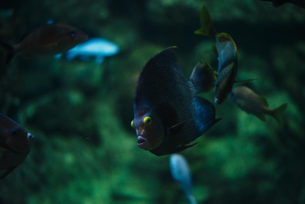 Yellow Eyed Fish 1 blog